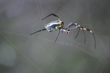 Spider in Moremi (3)